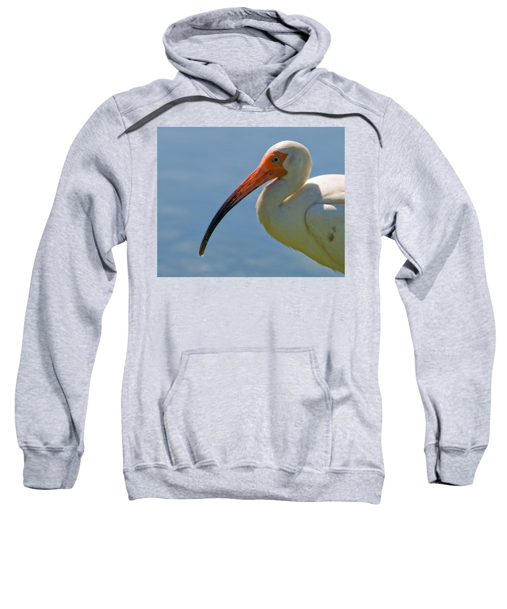 Ibis; White; Bird; Florida; Frog; Pollywogs; Pond; Seabird; Shore; Coast; Water; Fowl; Waterfowl; Fe Sweatshirt featuring the photograph White Ibis by Allan Hughes