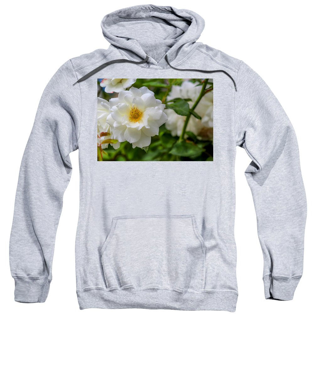 White Sweatshirt featuring the photograph White Rose by Alison Frank