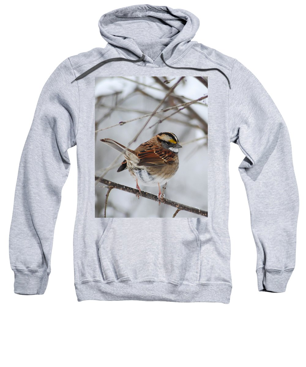 White-throated Sparrow Sweatshirt featuring the photograph White Throated Sparrow 2 by Michael Peychich