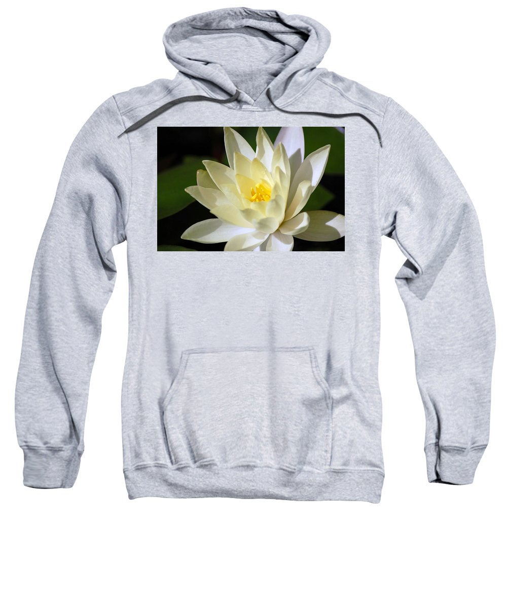 Water Lily Sweatshirt featuring the photograph White Water Lily by Donna Bentley