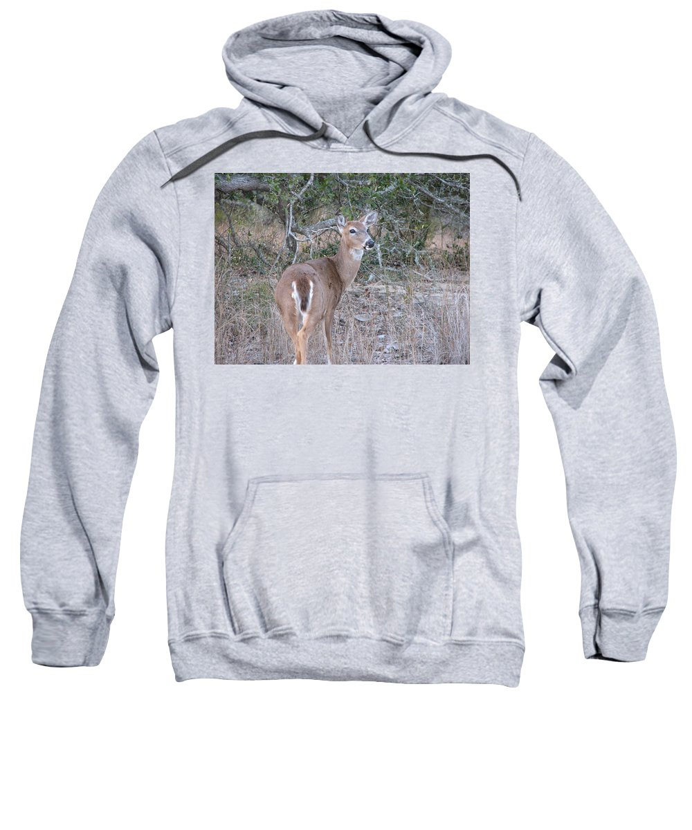 Deer Sweatshirt featuring the photograph Whitetail Deer II by Stacey May