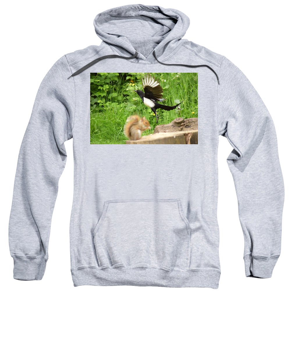 Squirrel Sweatshirt featuring the photograph Whooaa by Allan Charlton
