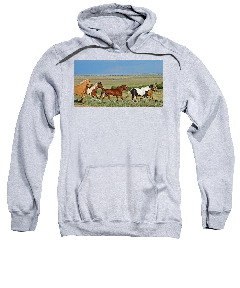 Herd Sweatshirt featuring the photograph Wild Horses Wyoming by Heather Coen