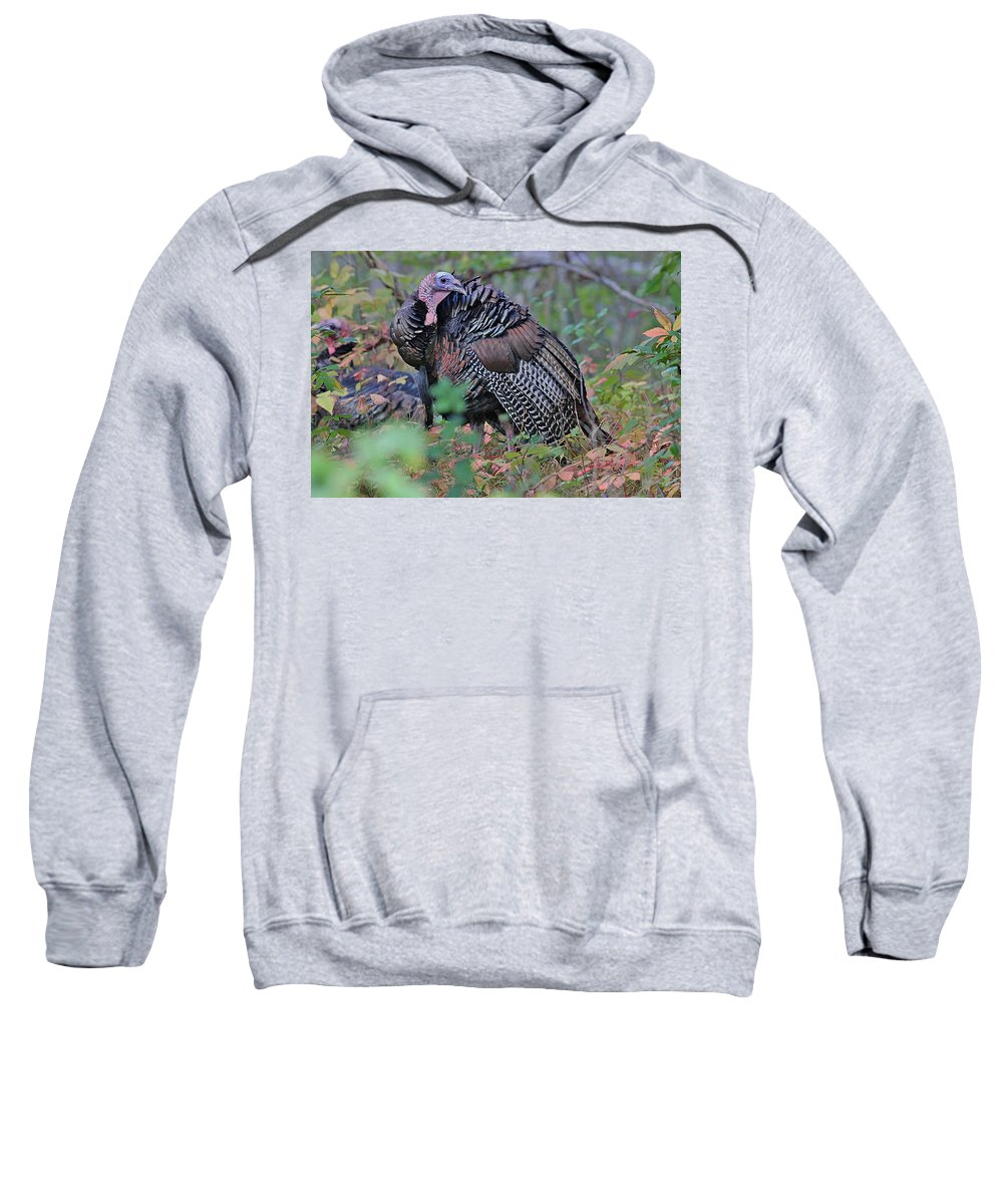 Turkey Sweatshirt featuring the photograph Wild Turkey by Linda Crockett