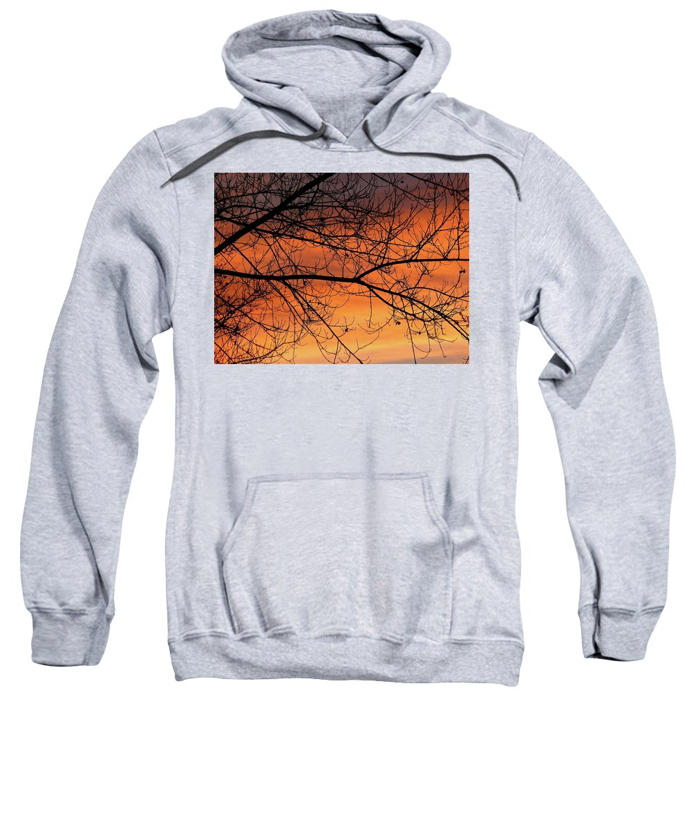 Tree Sweatshirt featuring the photograph Winter Morning by Diana Hatcher