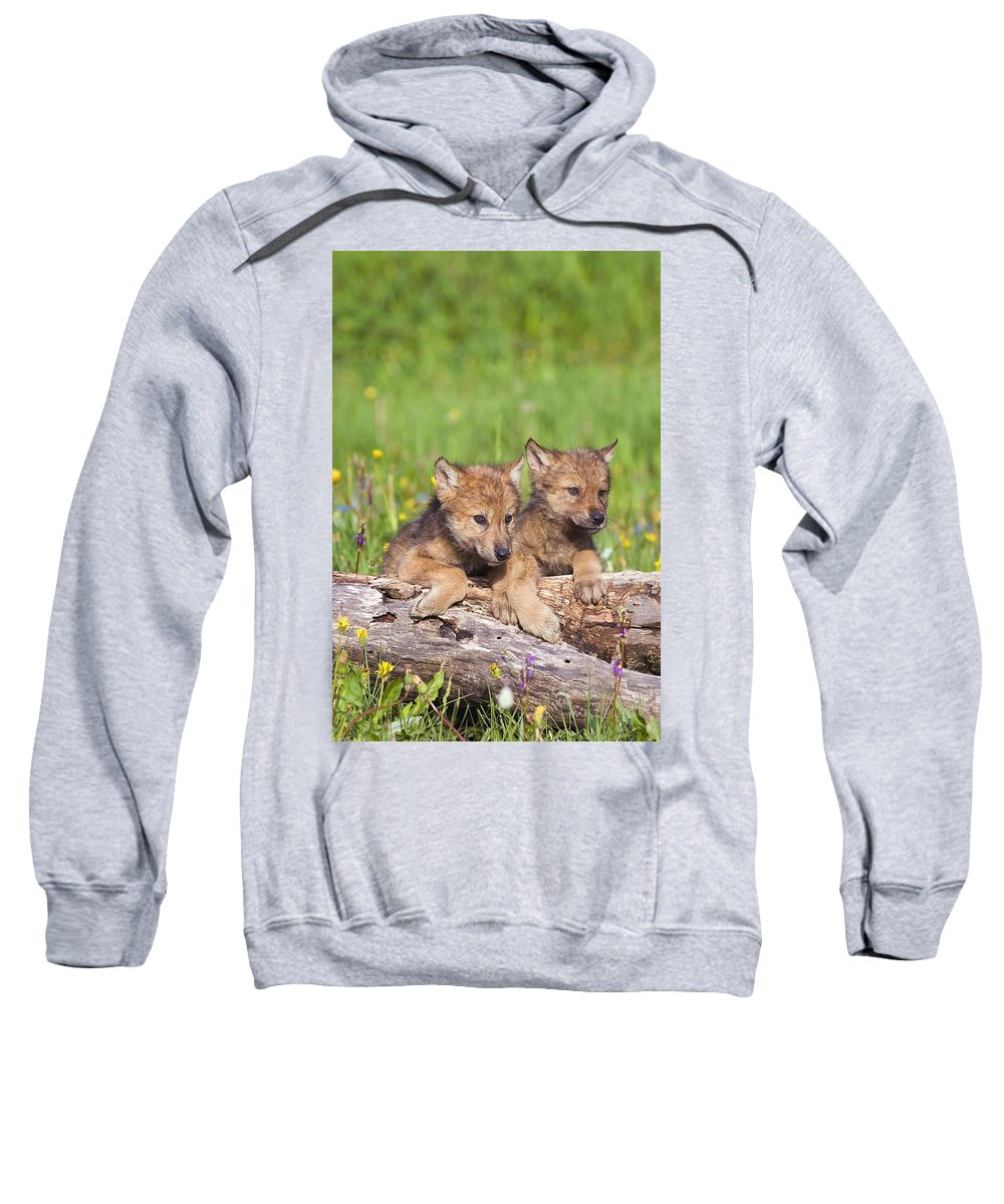 Animal Sweatshirt featuring the photograph Wolf Cubs On Log by John Pitcher