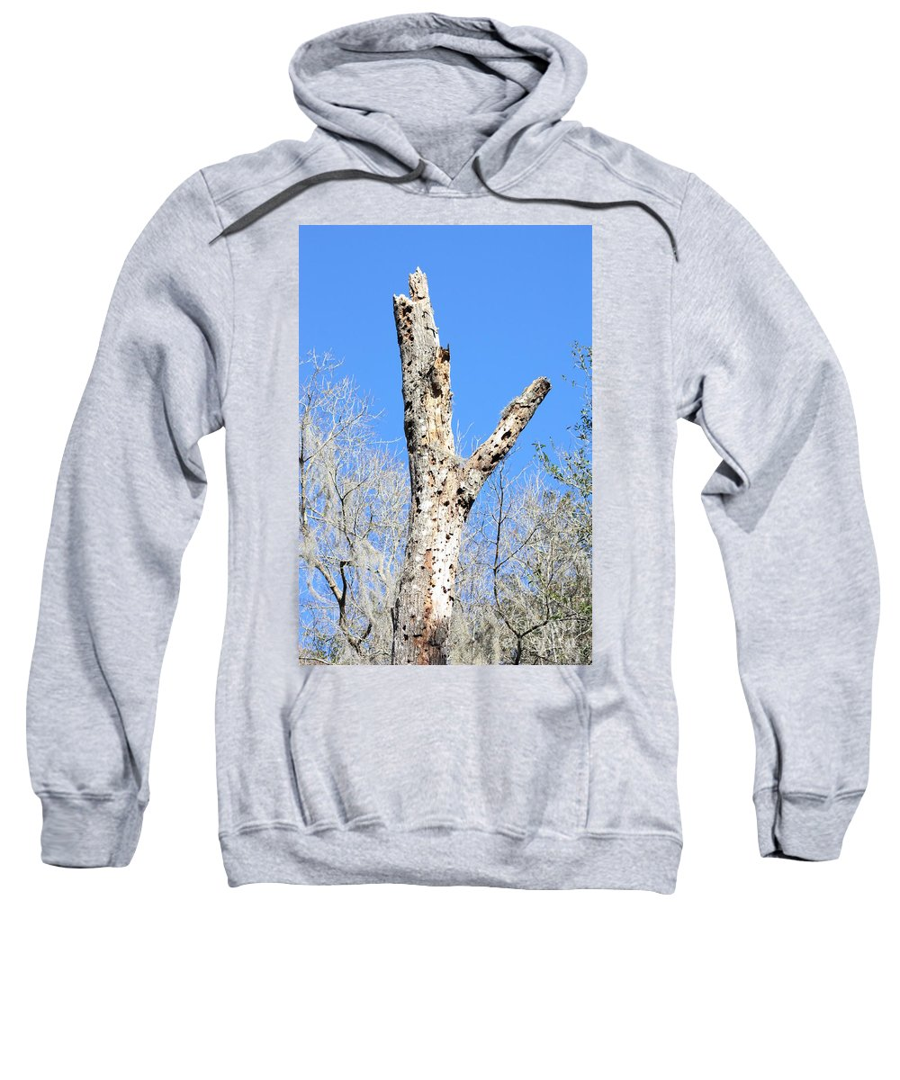 Old Tree Sweatshirt featuring the photograph Woodpecker Was Here by Carol Groenen