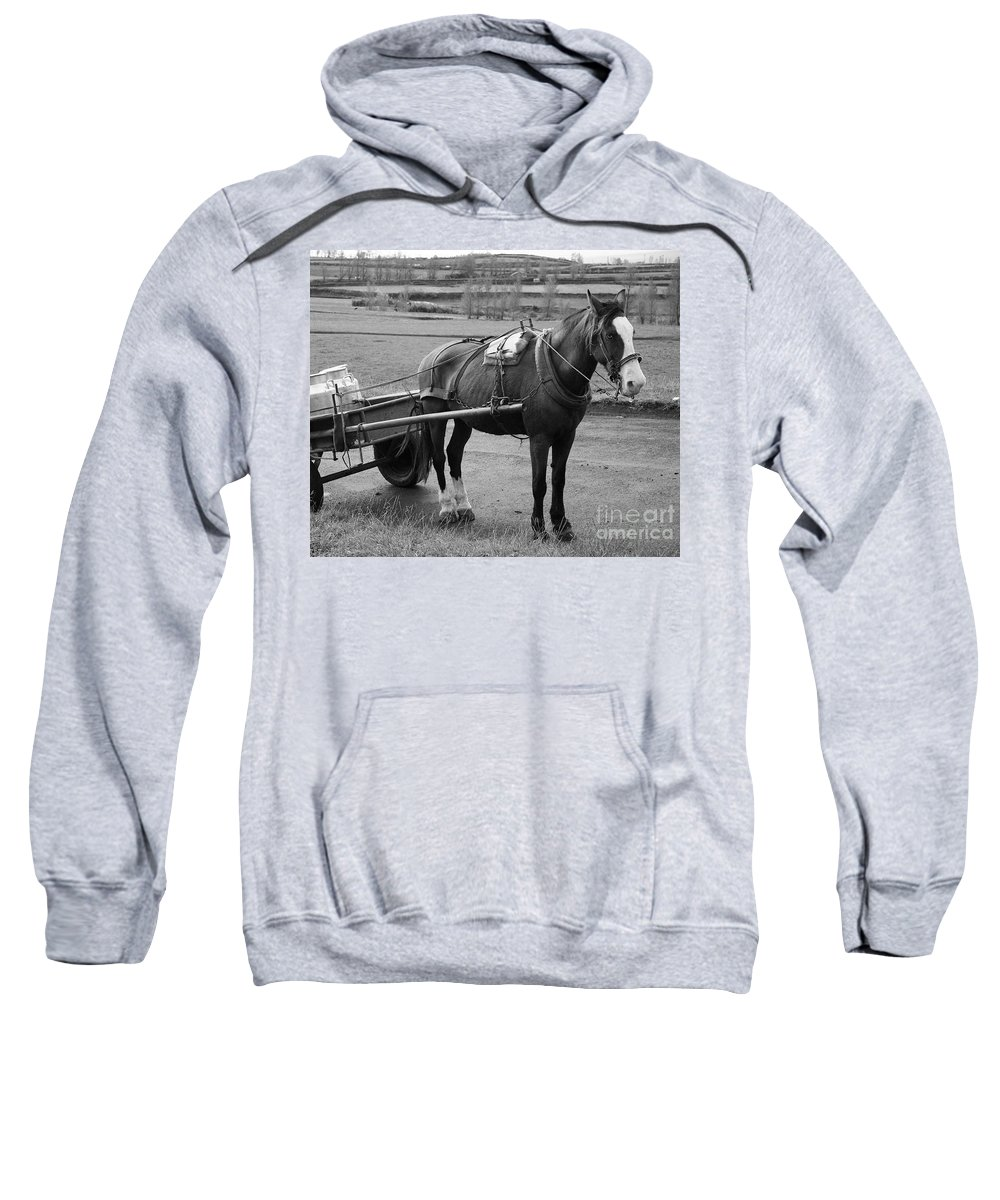 Cart Sweatshirt featuring the photograph Work Horse And Cart by Gaspar Avila