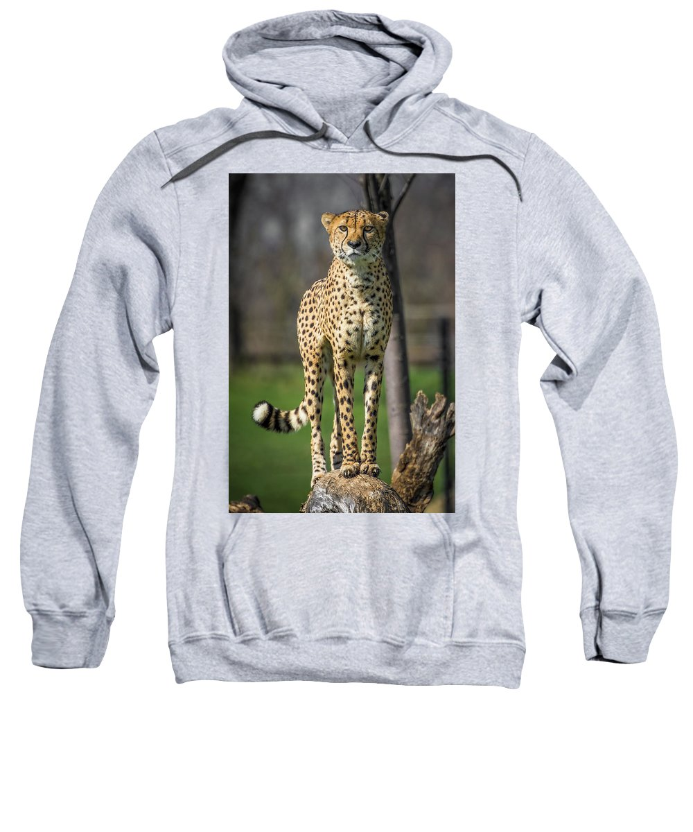 Africa Sweatshirt featuring the photograph World's Fastest Land Animal by Ron Pate