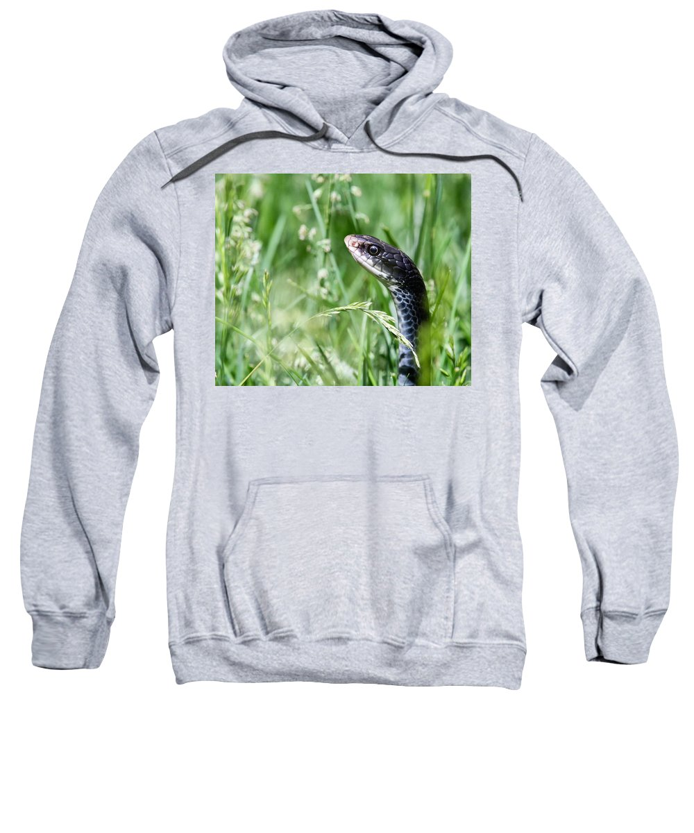 Snake Sweatshirt featuring the photograph Yard Snake by Cindy Archbell