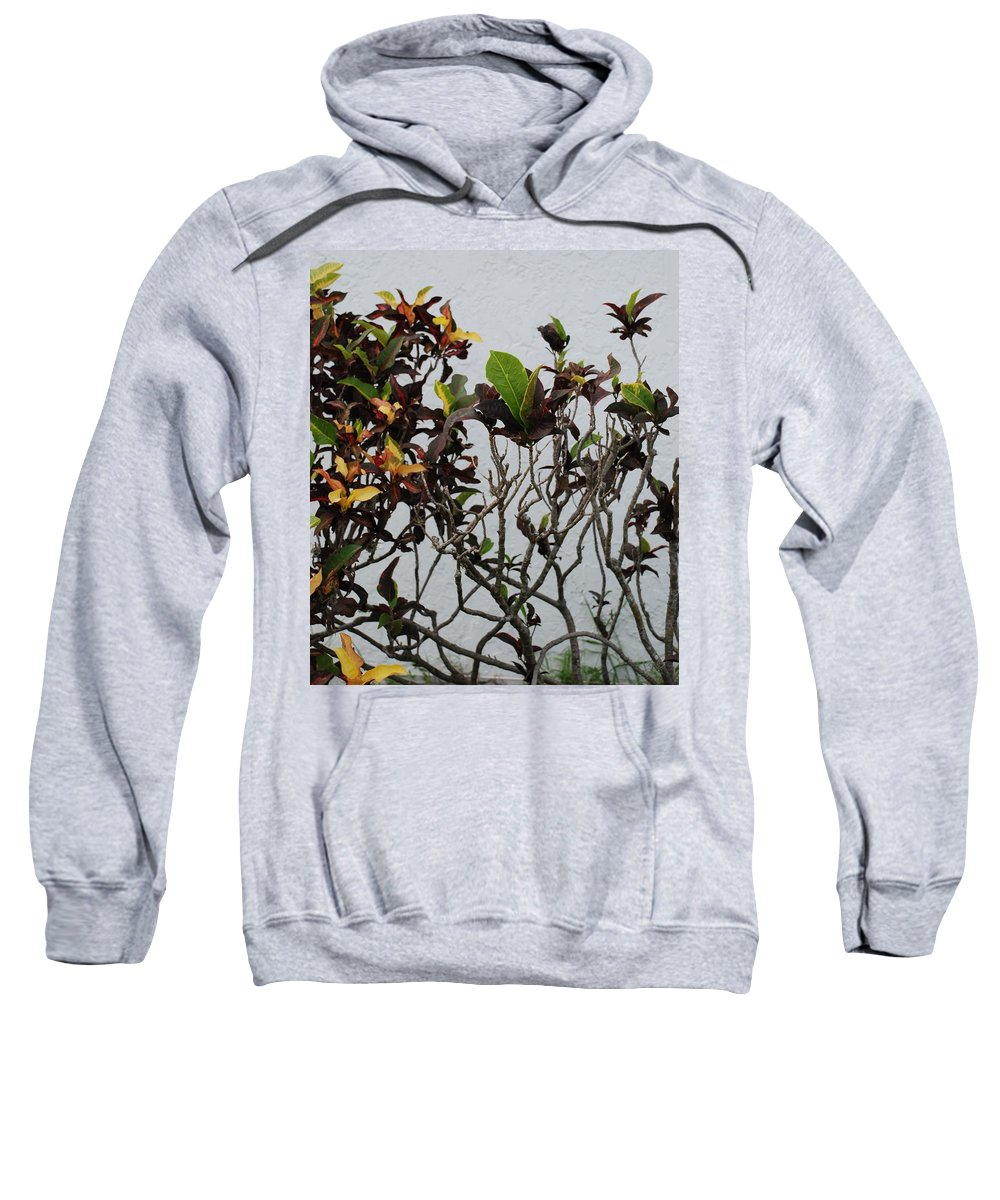 Macro Sweatshirt featuring the photograph Yellogreen by Rob Hans