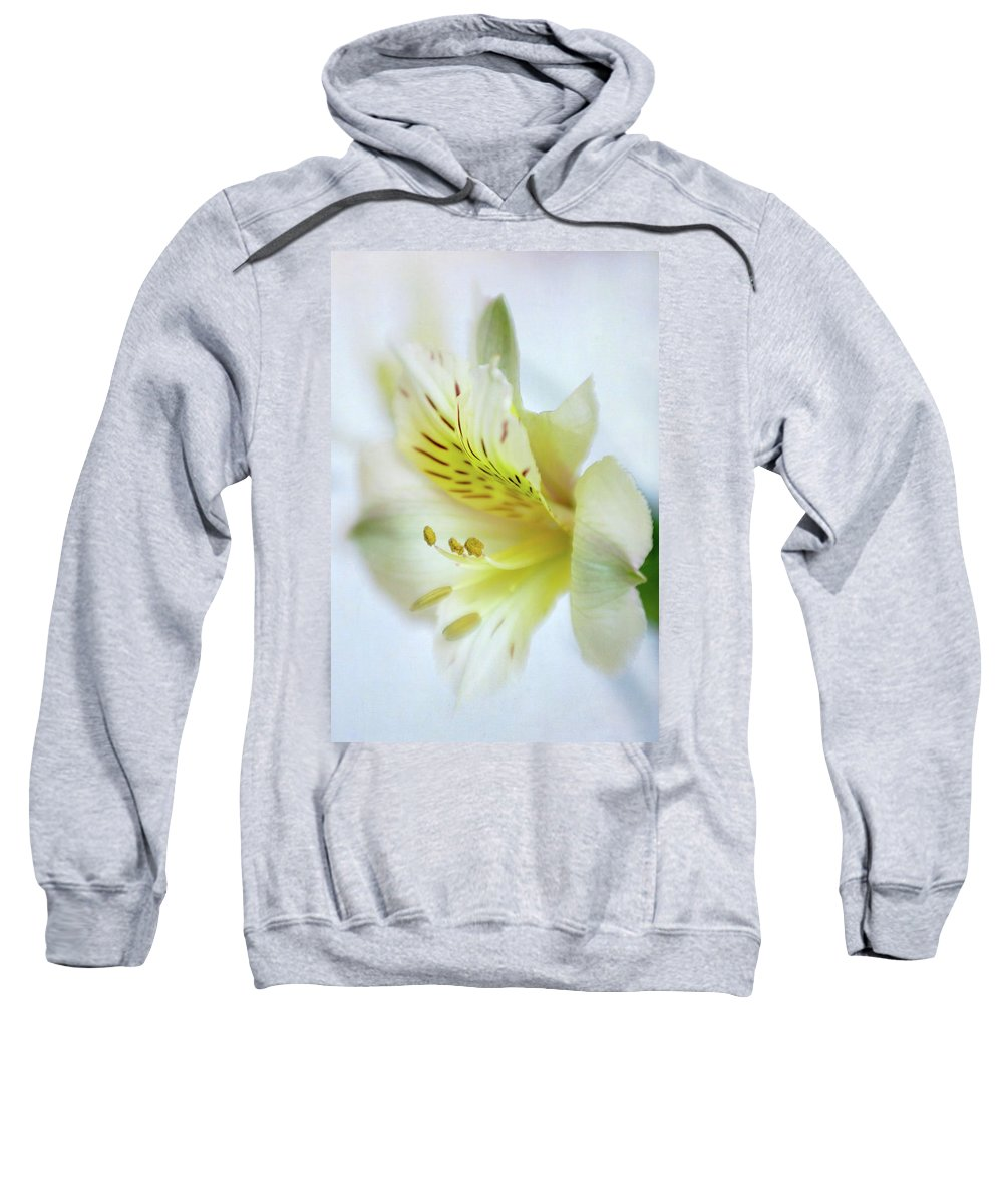 Alstroemeria Sweatshirt featuring the photograph Yellow Alstroemeria Meria by David and Carol Kelly