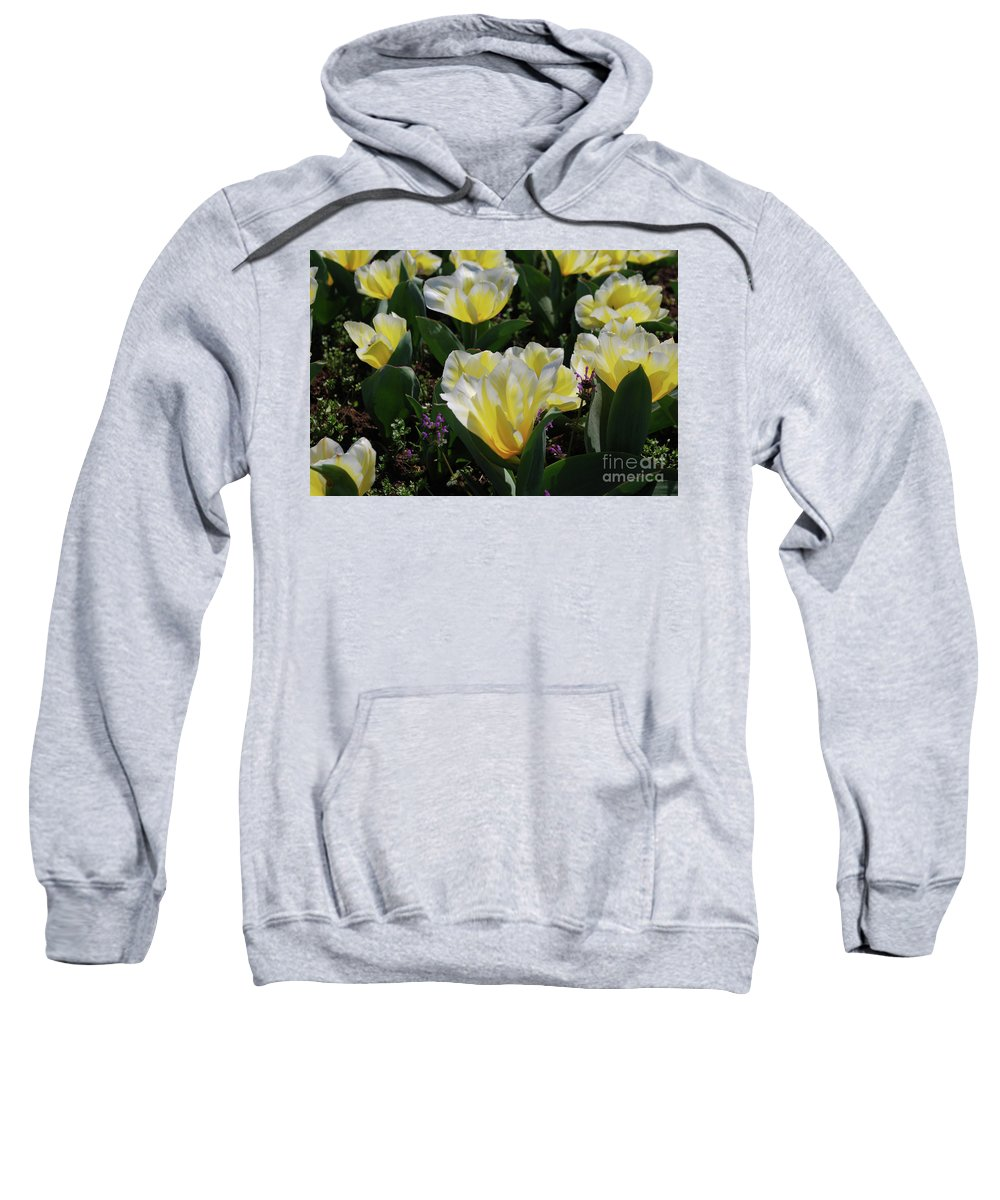 Tulip Sweatshirt featuring the photograph Yellow And White Tulips Flowering In A Garden by DejaVu Designs