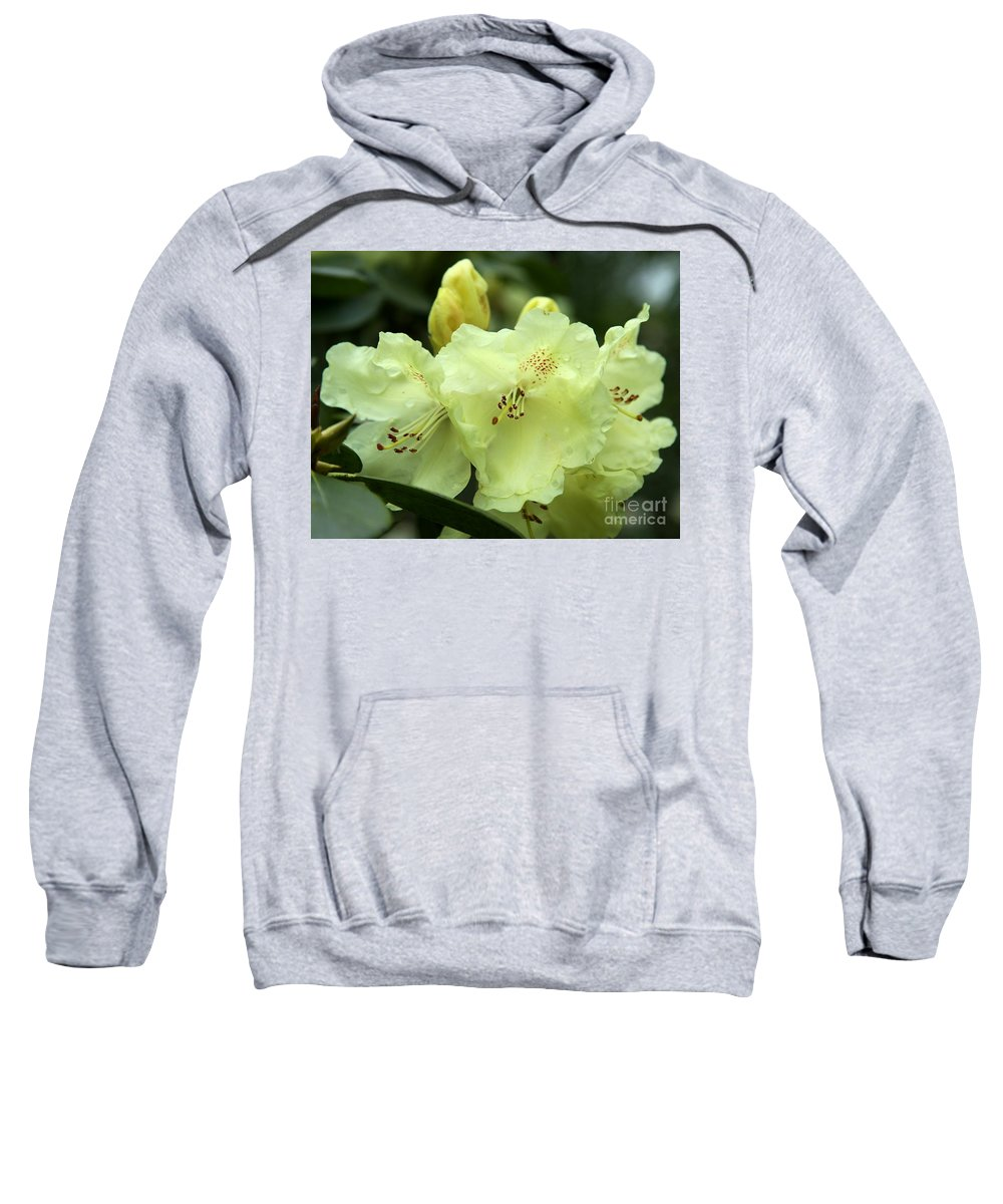 Rhododendron Sweatshirt featuring the photograph Yellow Bells by Christiane Schulze Art And Photography
