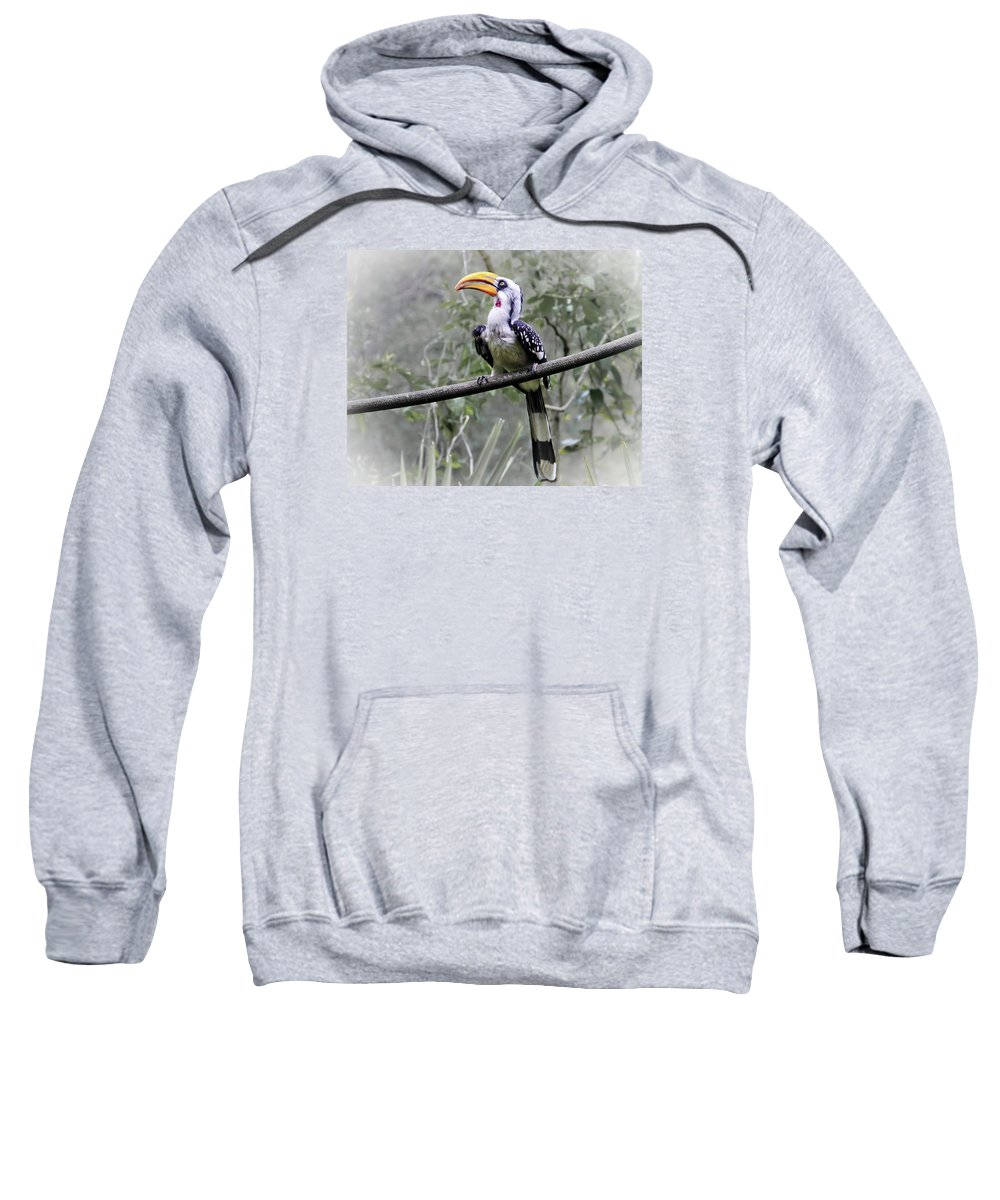 Brevard Zoo Sweatshirt featuring the photograph Yellow Billed Hornbill by Roger Wedegis