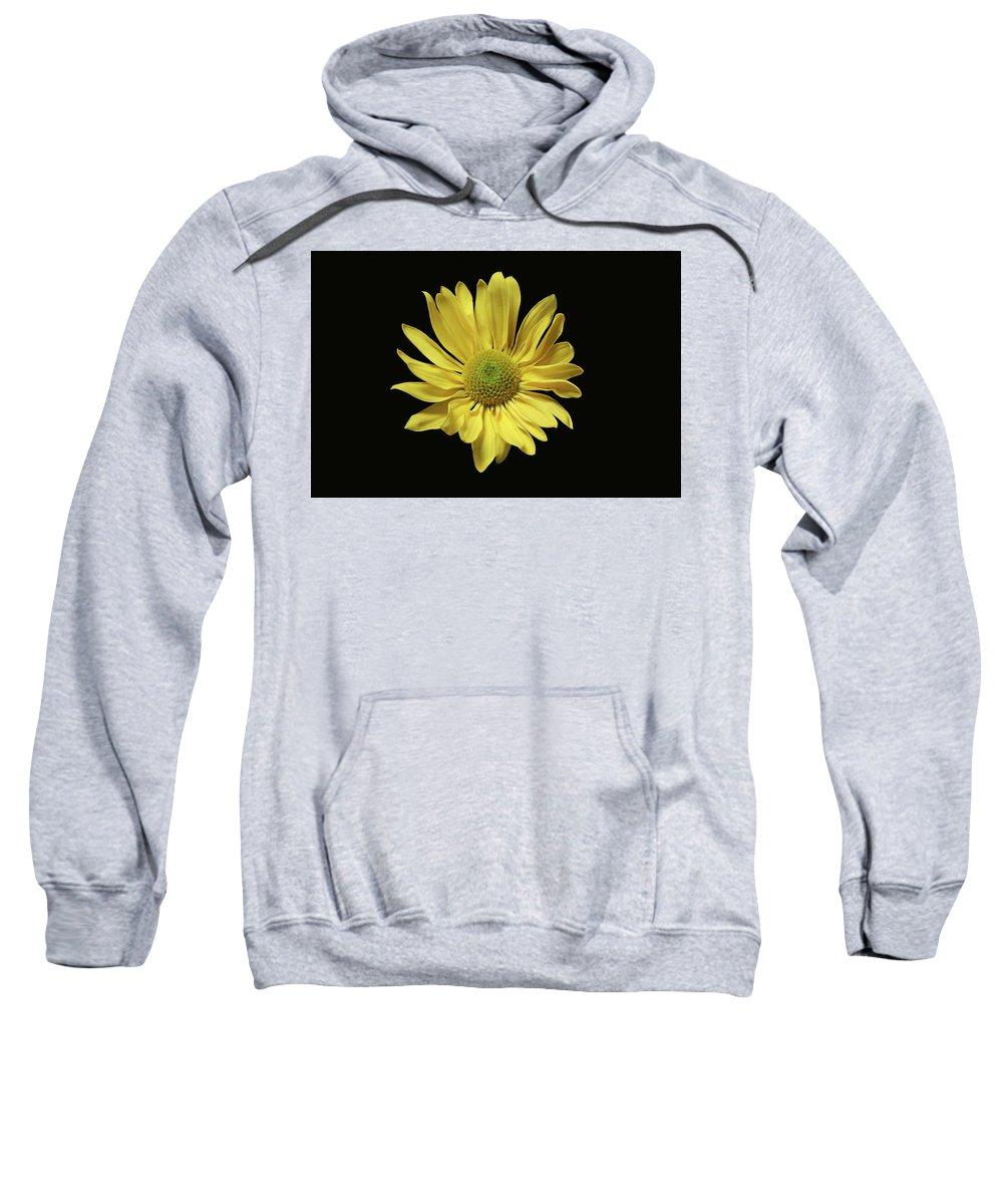 Yellow Daisy Sweatshirt featuring the photograph Yellow Daisy by Krisjan Krafchak