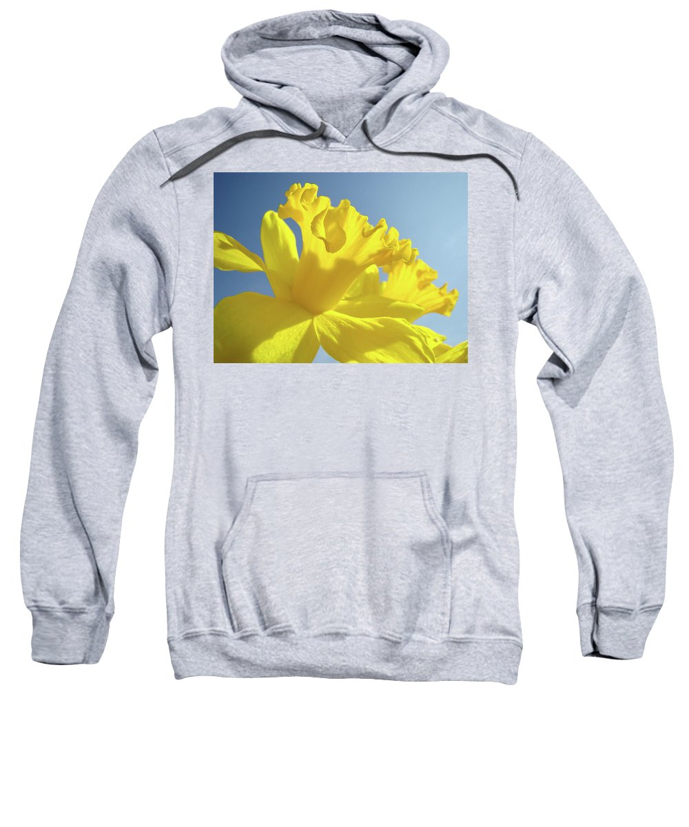 Flower Sweatshirt featuring the photograph Yellow Flower Floral Daffodils Art Prints Spring Blue Sky Baslee Troutman by Baslee Troutman