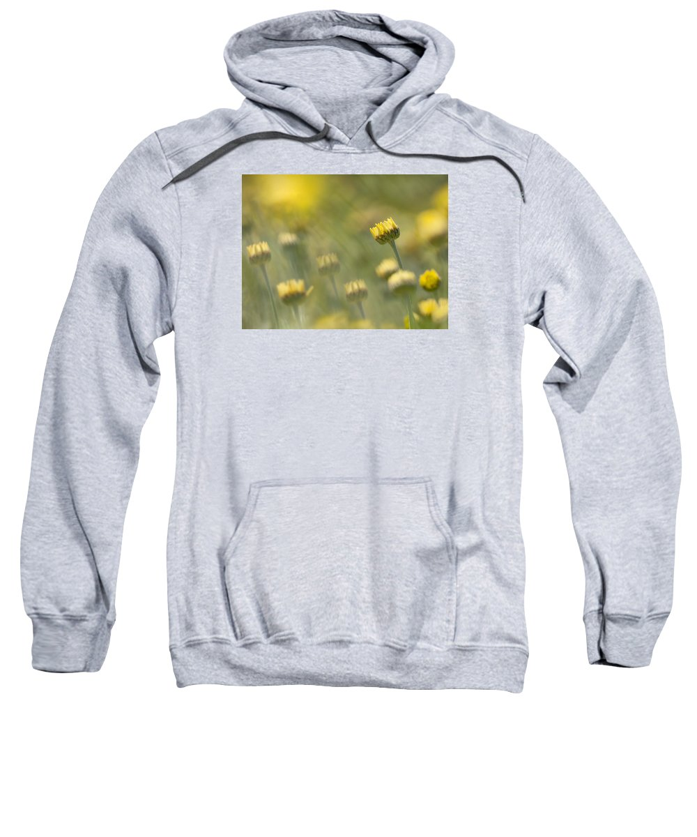 Flowers Sweatshirt featuring the photograph Yellow by Paul Schreiber