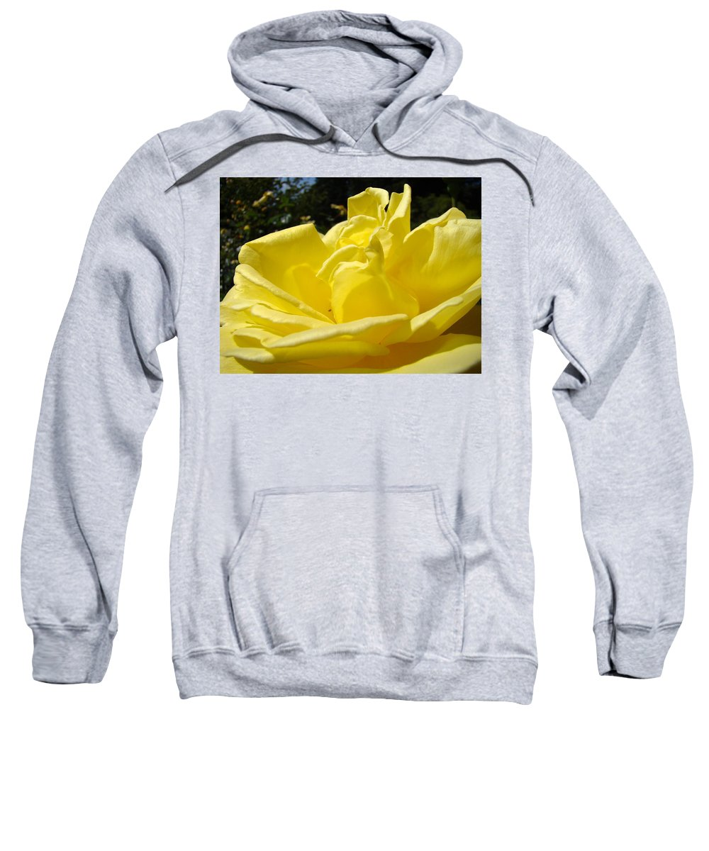 Rose Sweatshirt featuring the photograph Yellow Rose Sunny Art Prints Roses Flowers Baslee Troutman by Baslee Troutman