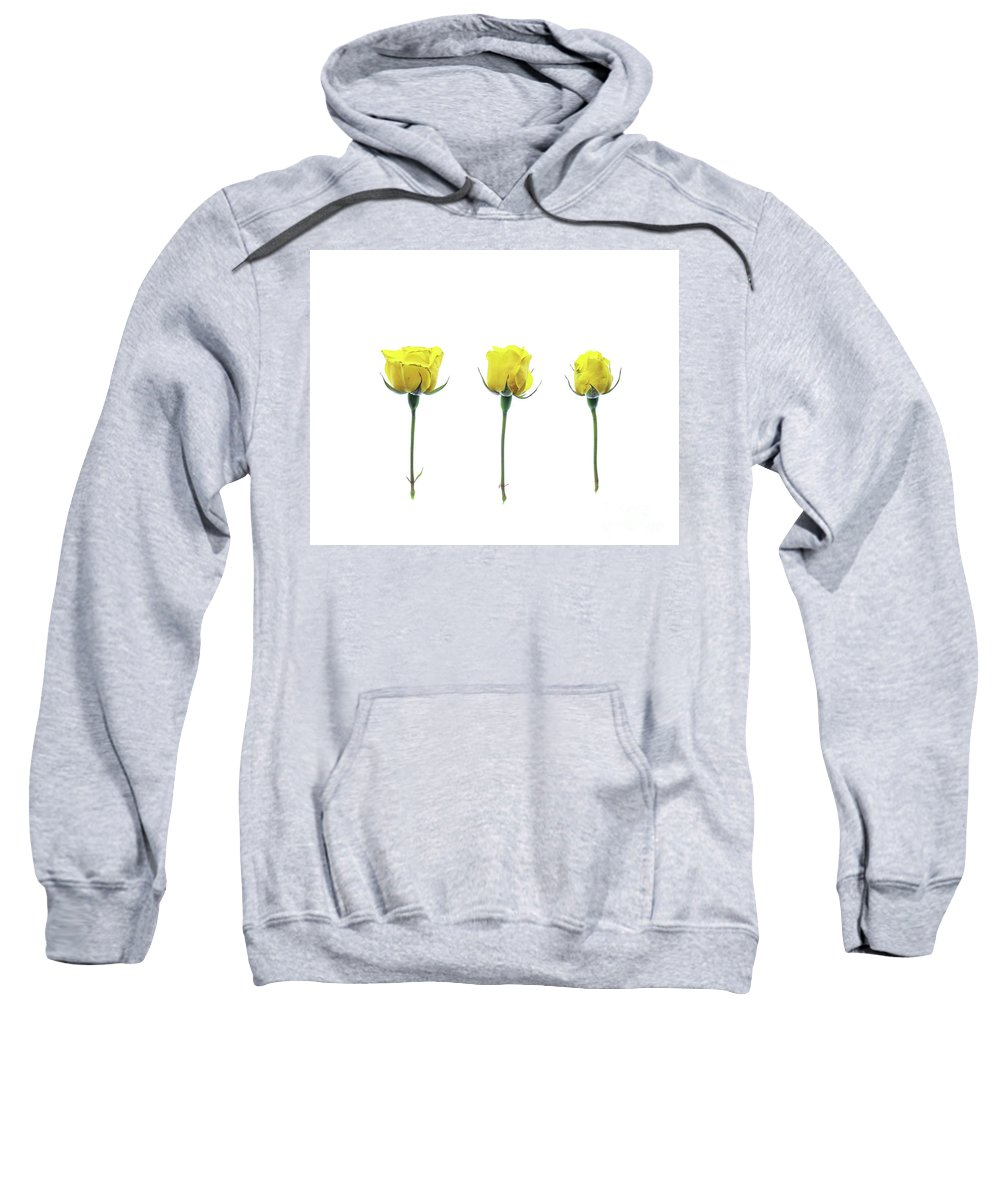 Flower Sweatshirt featuring the photograph Yellow Roses by Kelly Merlini