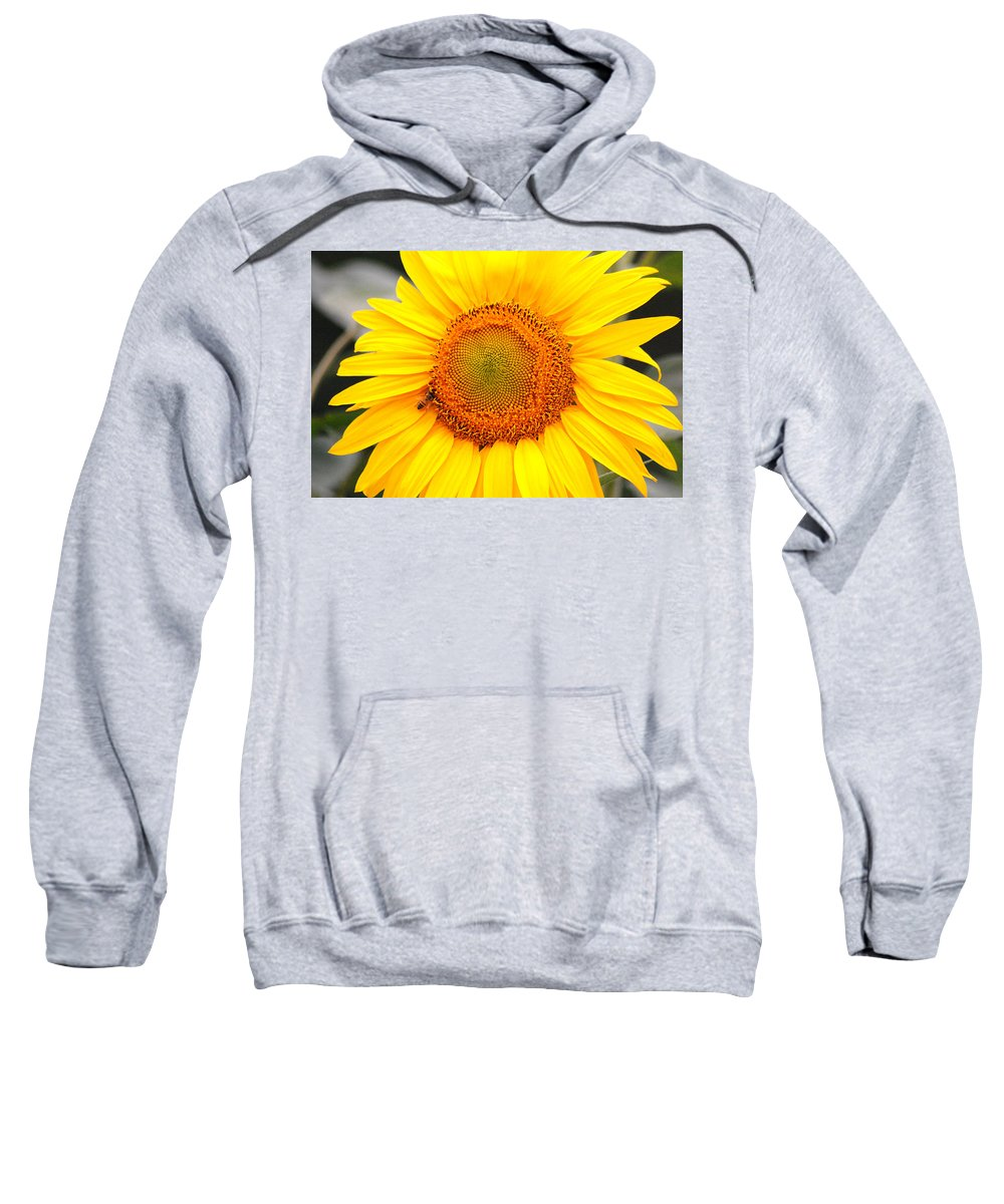 Sunflower Sweatshirt featuring the photograph Yellow Sunflower With Bee by Amy Fose