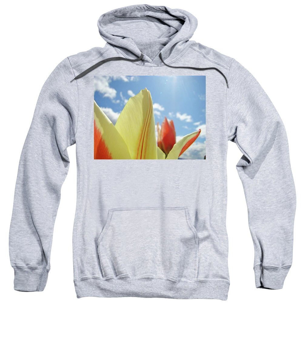 Tulip Sweatshirt featuring the photograph Yellow Tulip Flower Art Prints Spring Blue Sky Clouds Baslee Troutman by Baslee Troutman