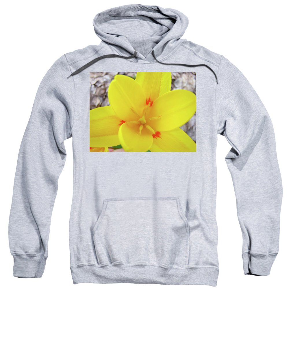 �tulips Artwork� Sweatshirt featuring the photograph Yellow Tulip Flower Spring Flowers Floral Art Prints by Baslee Troutman