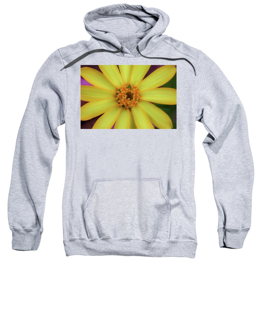Yellow Flower Sweatshirt featuring the photograph Yellow Zinn by Kelly Foreman