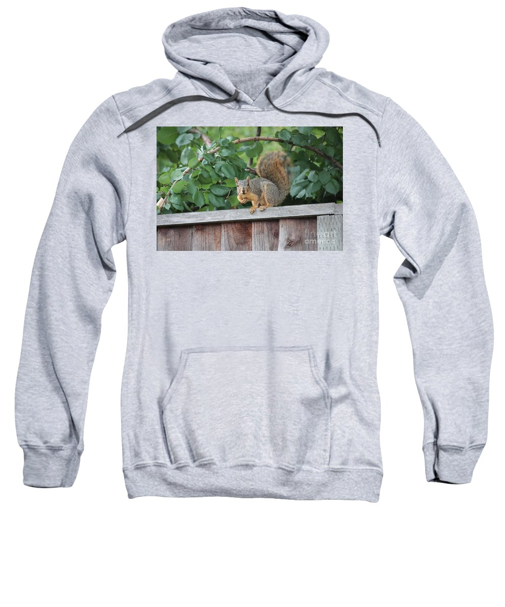 Animals Sweatshirt featuring the photograph You Looking At Me by Carol Groenen