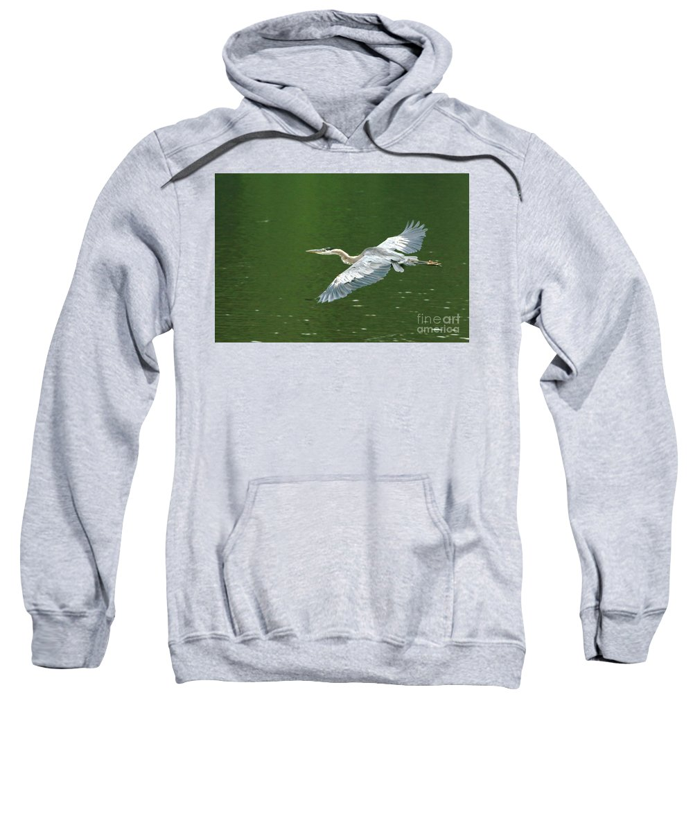 Landscape Nature Wildlife Bird Crane Heron Green Flight Ohio Water Sweatshirt featuring the photograph Young Great Blue Heron Taking Flight by Dawn Downour