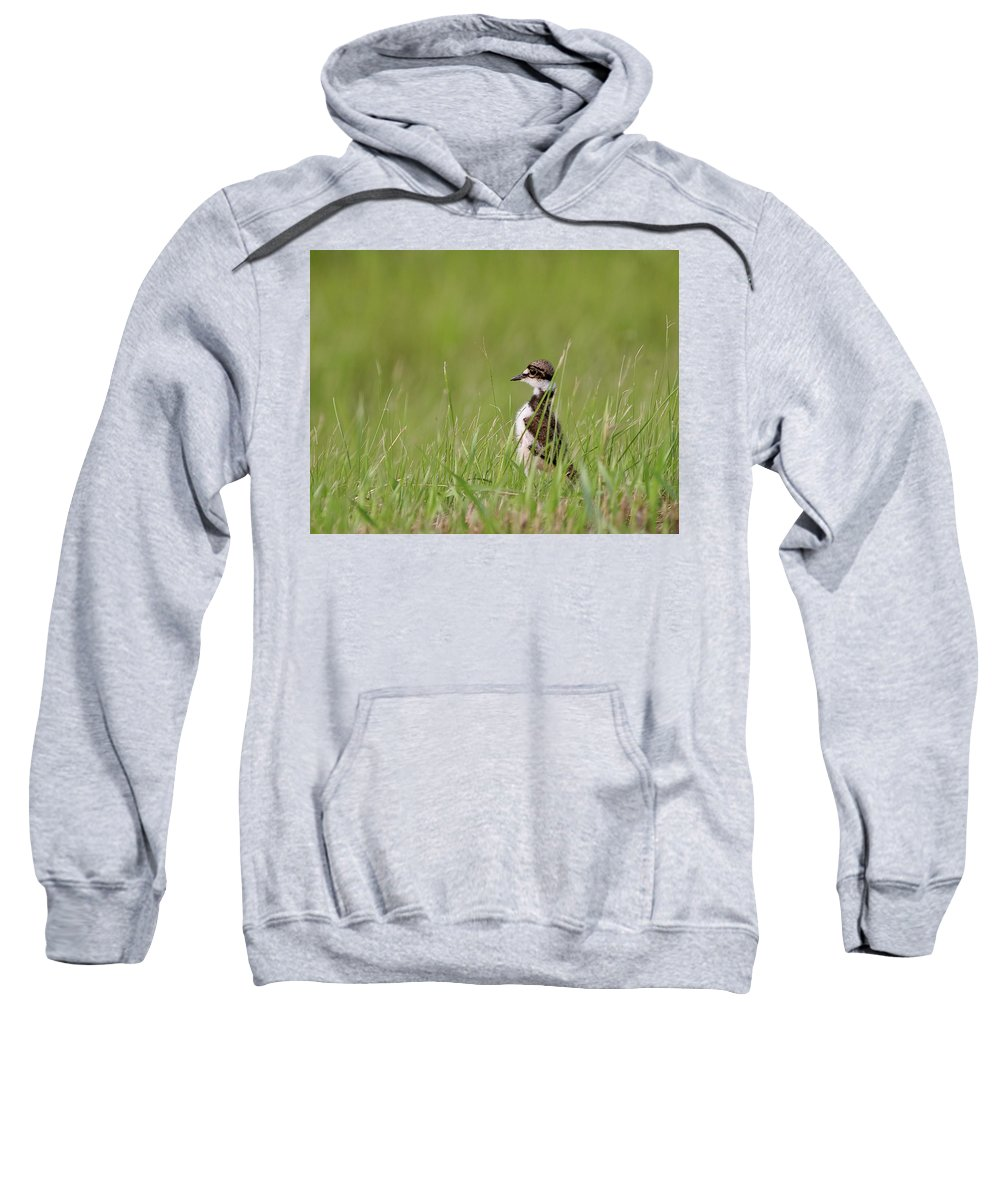 Killdeer Sweatshirt featuring the digital art Young Killdeer In Grass by Mark Duffy