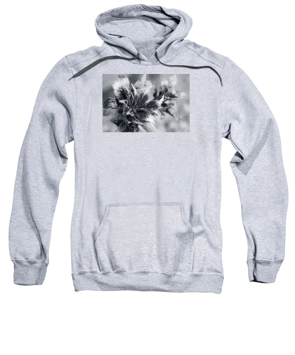 Flower Sweatshirt featuring the photograph Young Leaves In Black And White by Irina Effa