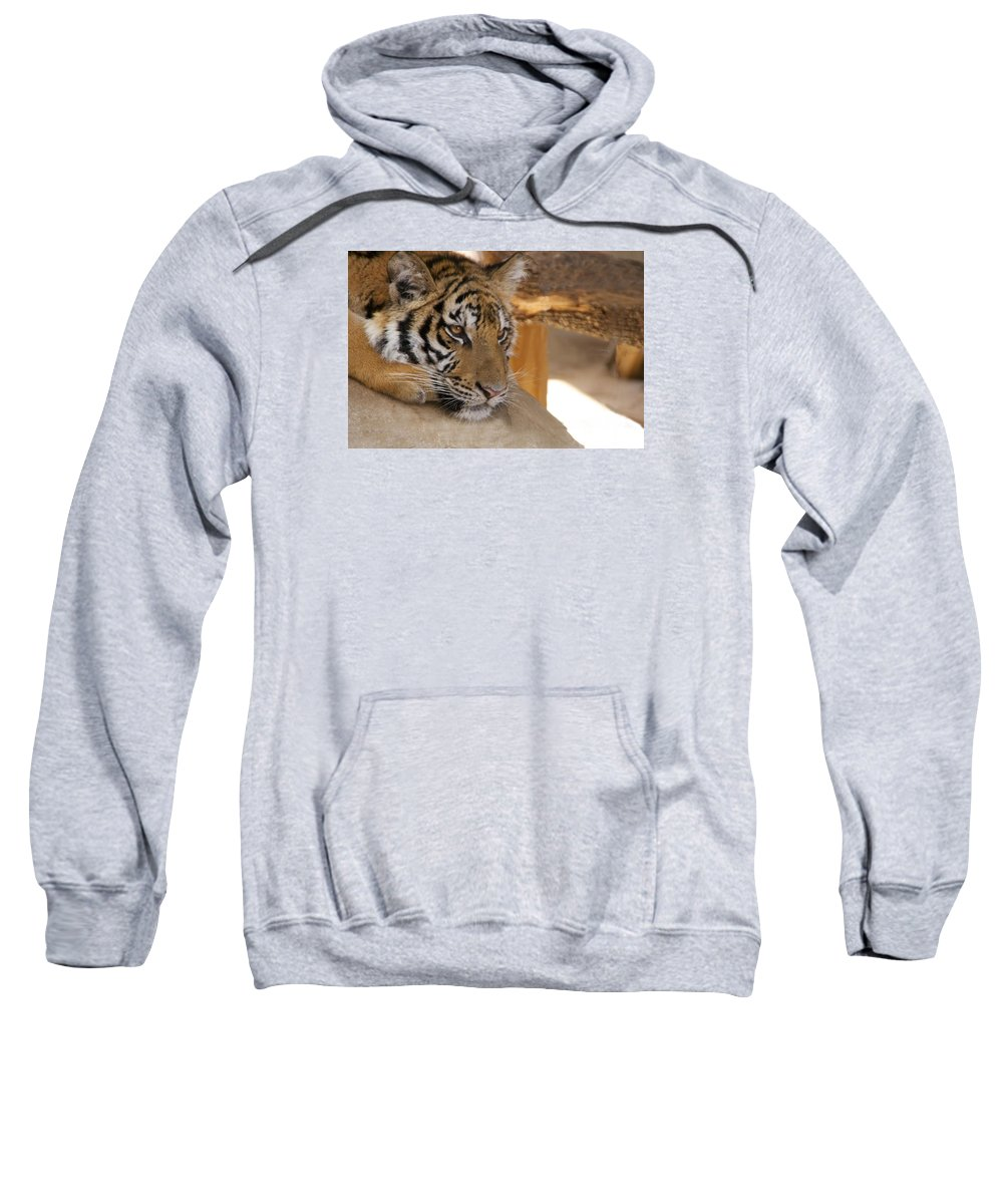 Tiger Sweatshirt featuring the photograph Young Tiger by Toni Berry