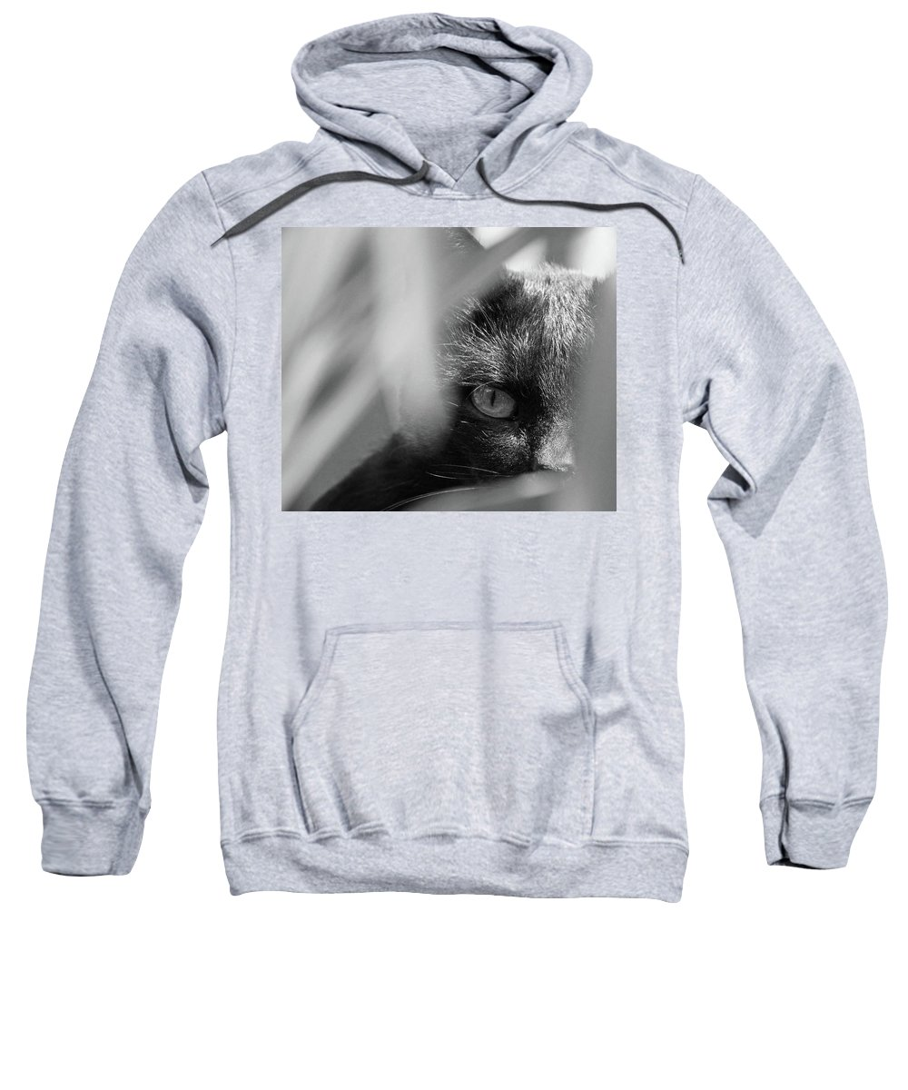 Cat Sweatshirt featuring the photograph You're Being Watched... by Daniel Csoka