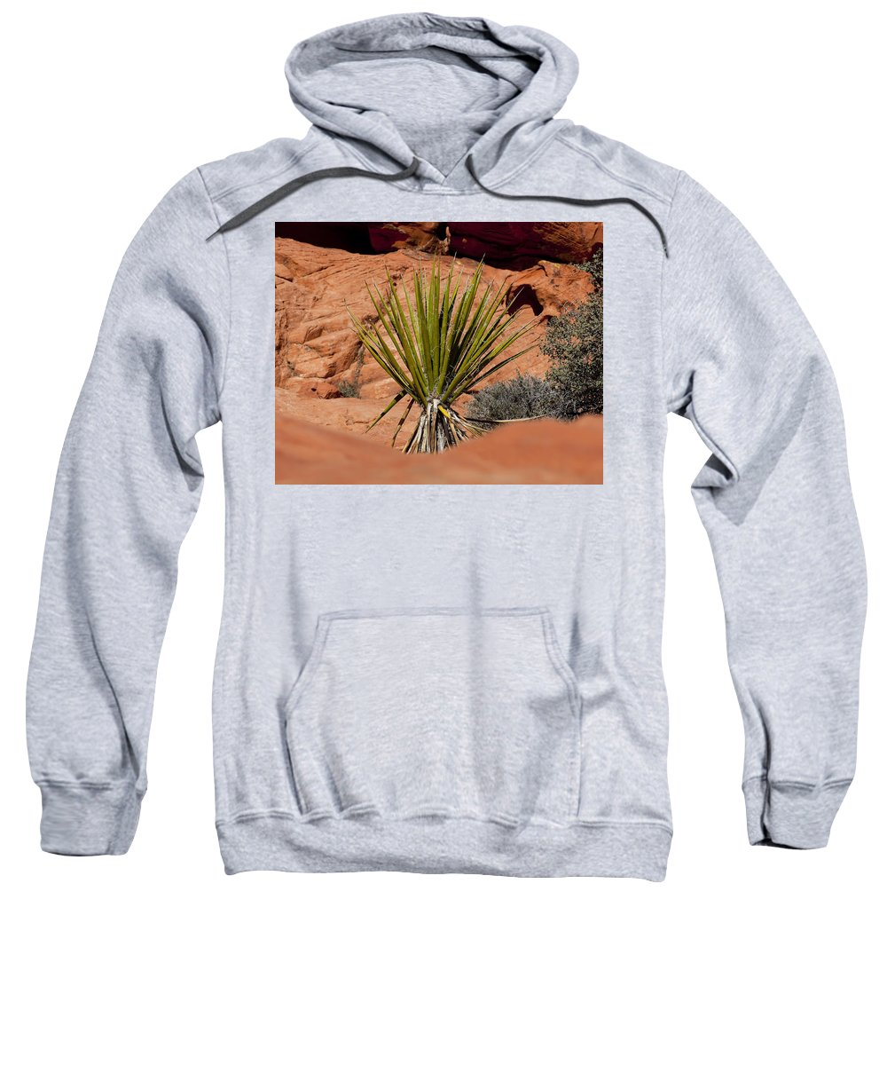 Yucca Plant Sweatshirt featuring the photograph Yucca Beauty by Kelley King