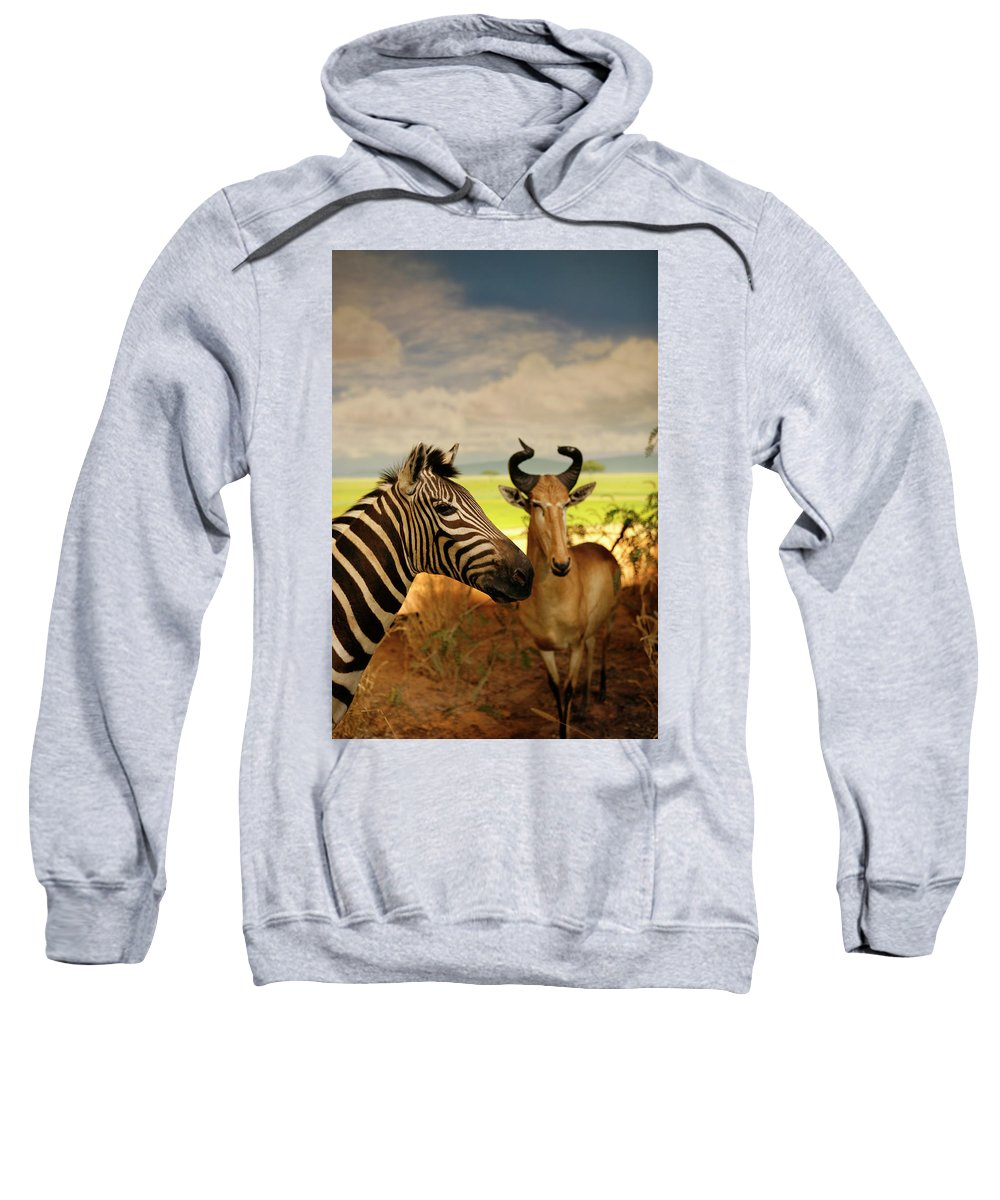 Nature Sweatshirt featuring the photograph Zebra And Antelope by Marilyn Hunt