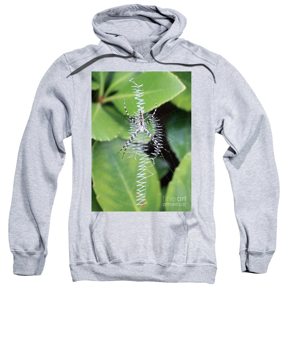 Spider Sweatshirt featuring the photograph Zipper Spider by Carol Groenen