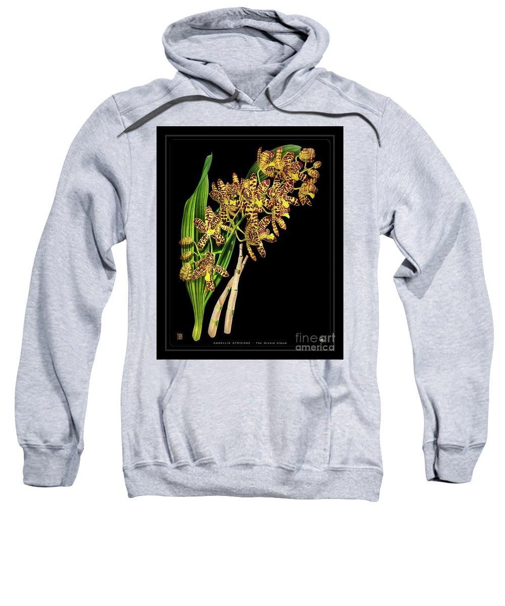 Black Sweatshirt featuring the drawing Vintage Orchid Print On Black Paperboard by Baptiste Posters