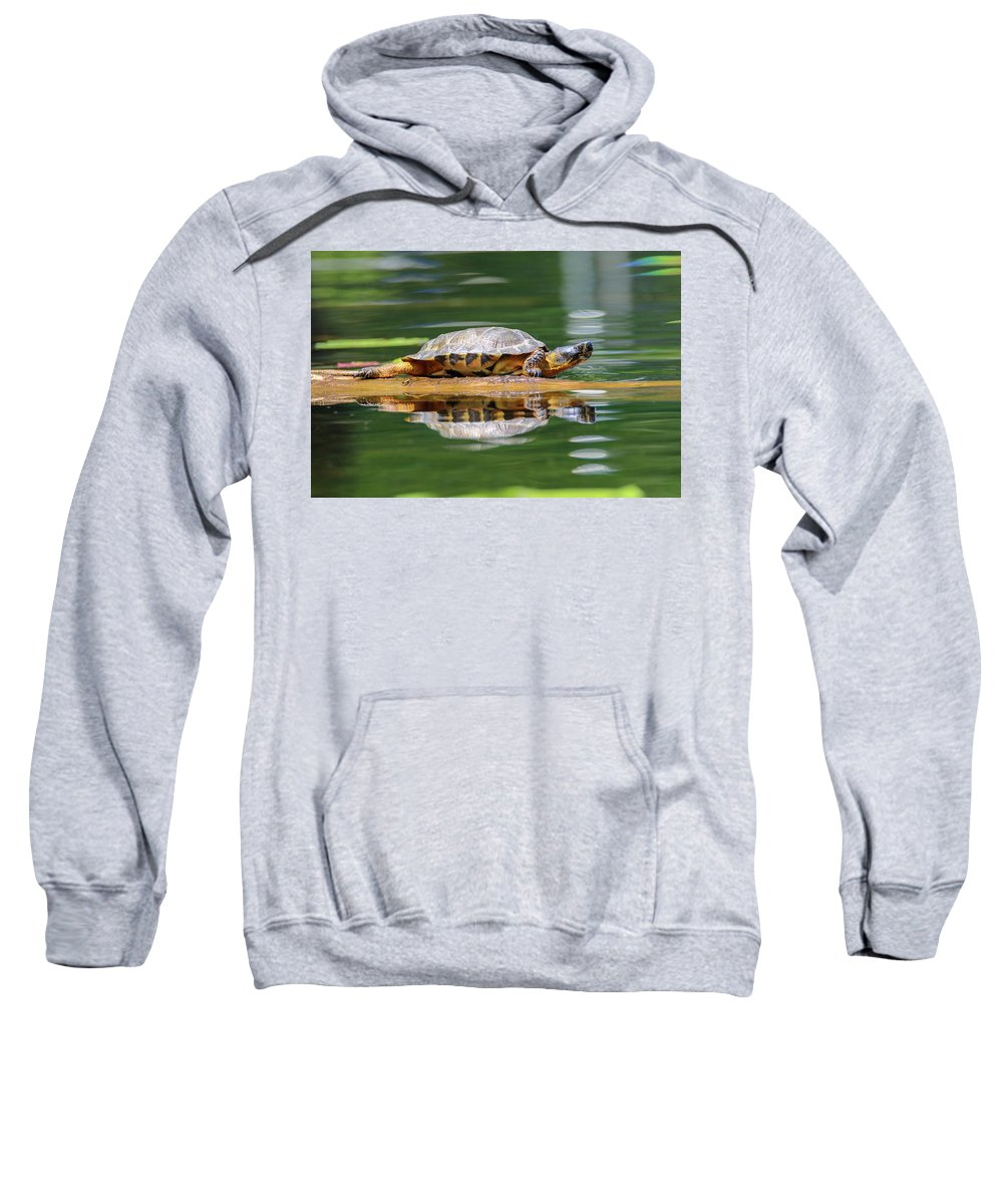 Cute Sweatshirt featuring the photograph Wood Turtle by Brook Burling