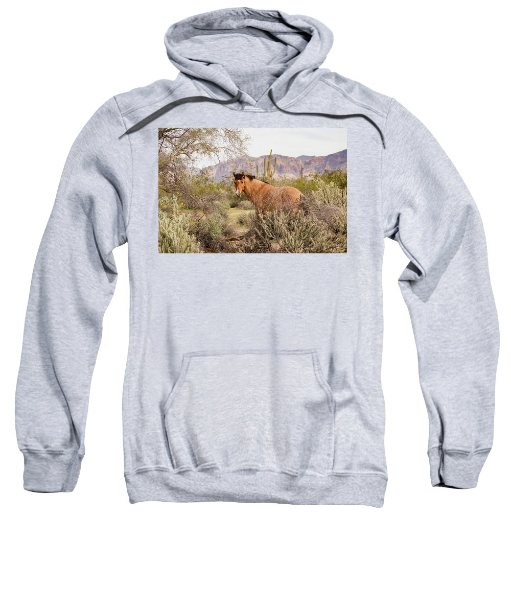 Usa Sweatshirt featuring the photograph A Desert Poser by Cathy Franklin