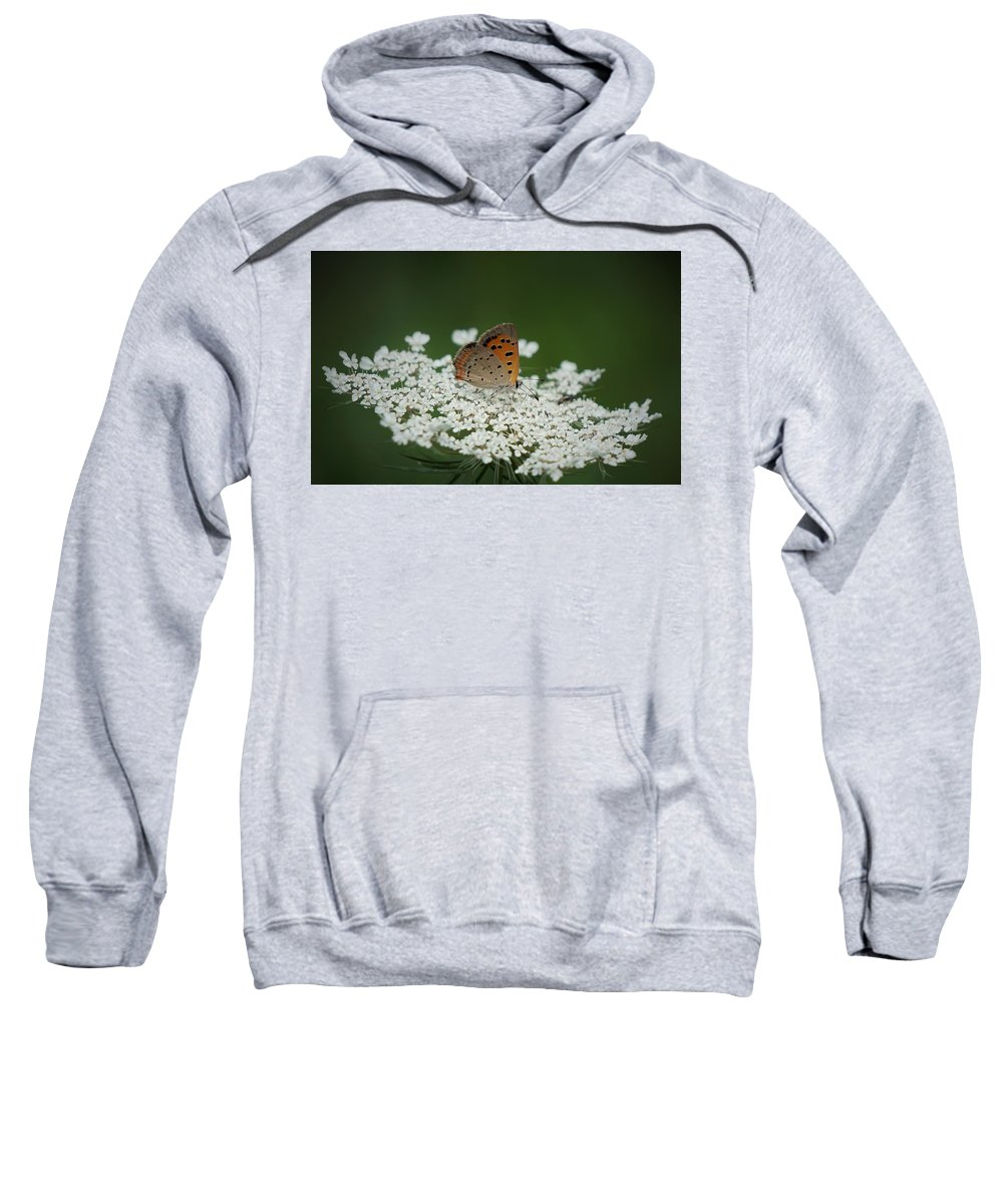 American Copper Sweatshirt featuring the photograph American Copper On Queen Anne's Lace by Stacey Whetstone