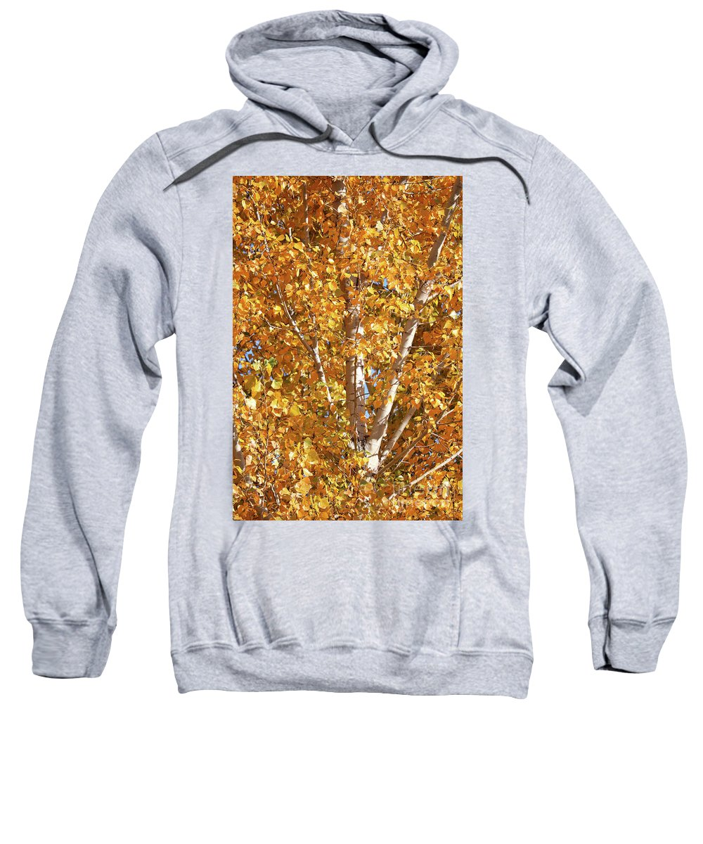Yellow Sweatshirt featuring the photograph Autumn Golden Leaves by Carol Groenen