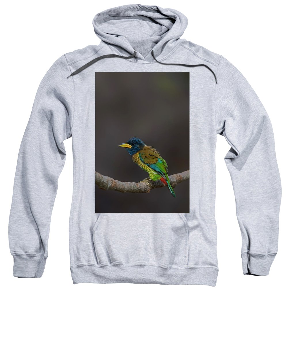 Bird Images For Print Sweatshirt featuring the photograph Great barbet by Uma Ganesh