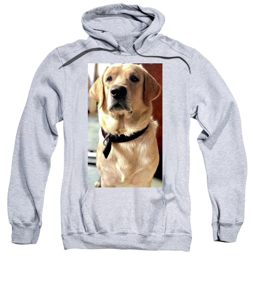Labrador Dog Hooded Sweatshirts T-Shirts