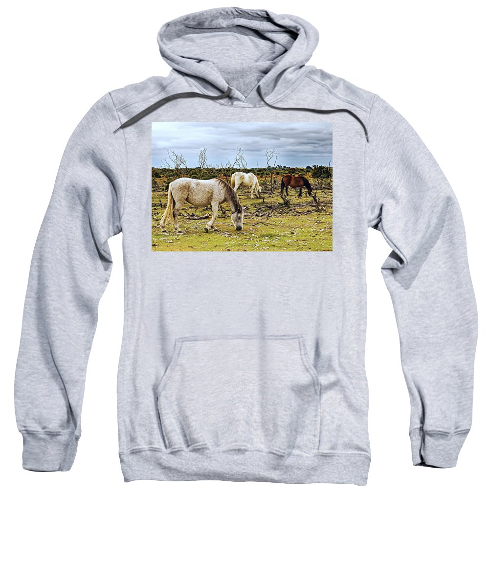 New Forest Sweatshirt featuring the photograph New Forest Ponies On The Heath by Jeff Townsend