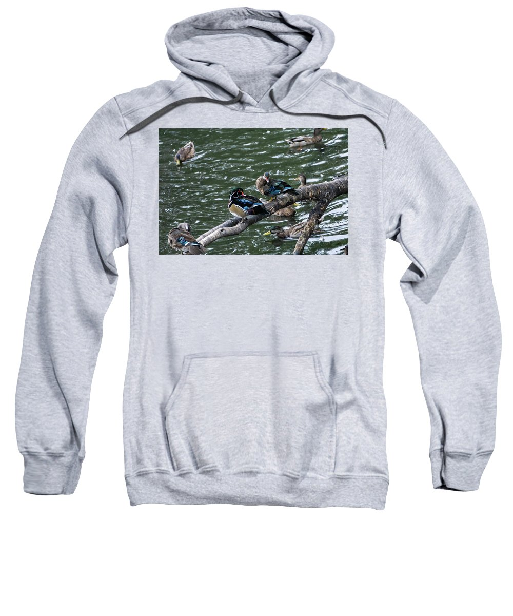 Water Birds Hooded Sweatshirts T-Shirts