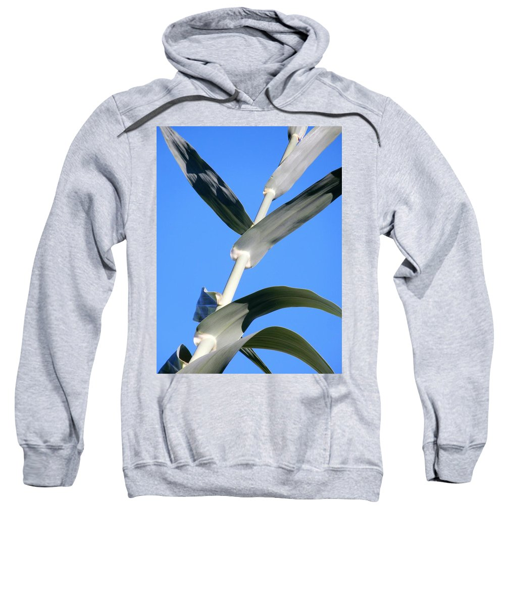 Bamboo Sweatshirt featuring the photograph Towering Big Long Leaves by Tina M Wenger
