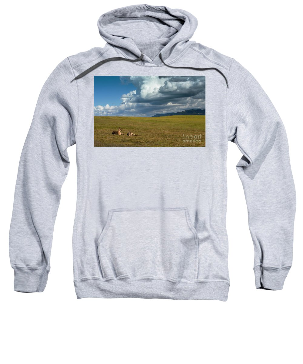 Eastern Grey Kangaroos Sweatshirt featuring the photograph Kangaroos and approaching storm by Sheila Smart Fine Art Photography