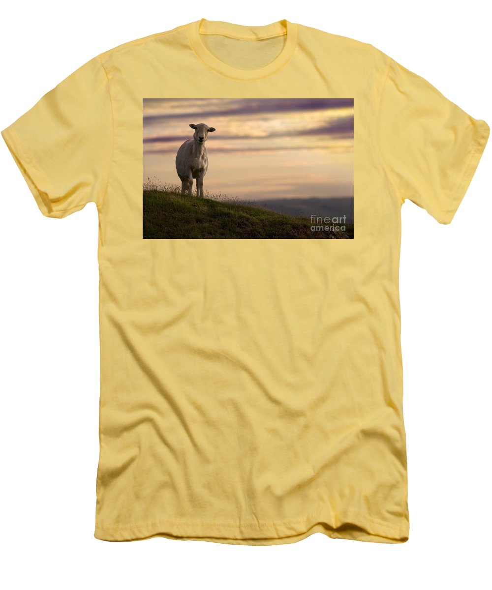 Sheep Men's T-Shirt (Athletic Fit) featuring the photograph On The Top Of The World by Angel Ciesniarska