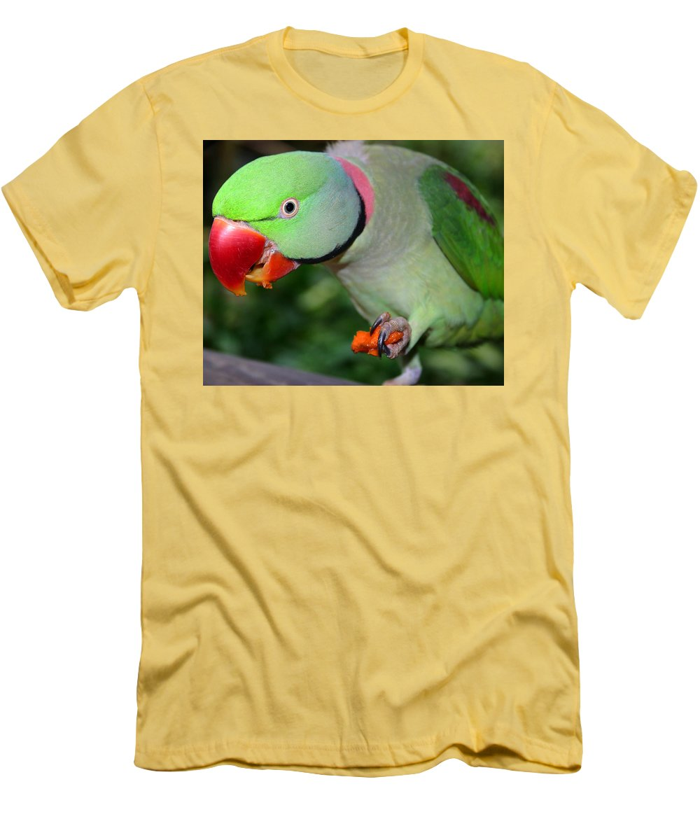 Alexandrine Parrot Men's T-Shirt (Athletic Fit) featuring the photograph Alexandrine Parrot Feeding by Ralph A Ledergerber-Photography